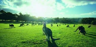 cute-australian-animals