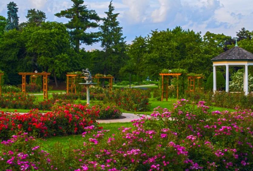 Allentown Rose garden PA