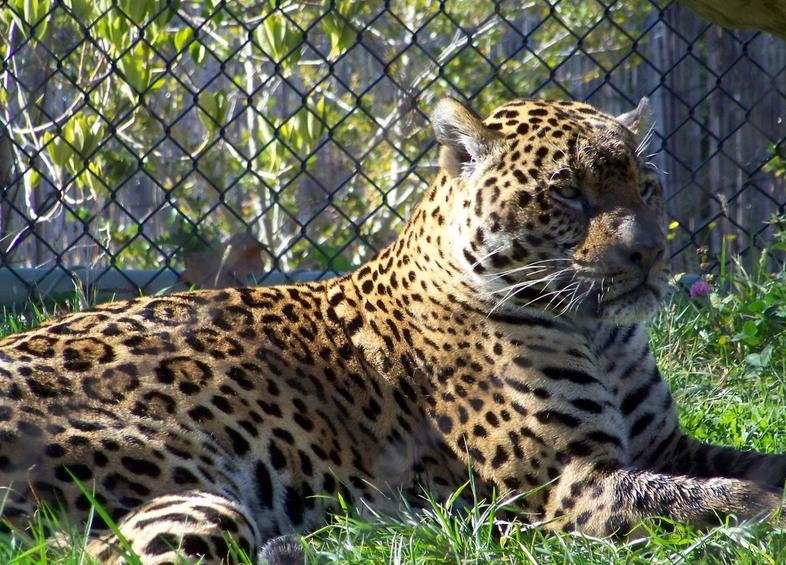 Mesker Park Zoo EVANSVILLE