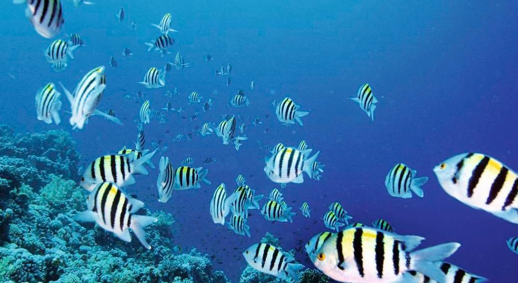 Underwater safari, Malta