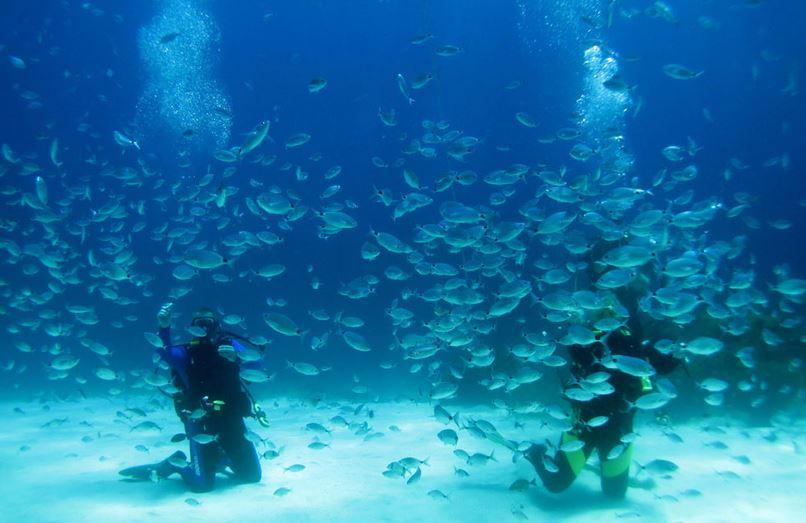 diving in gozo 2015
