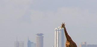 THINGS TO DO IN NAIROBI africa