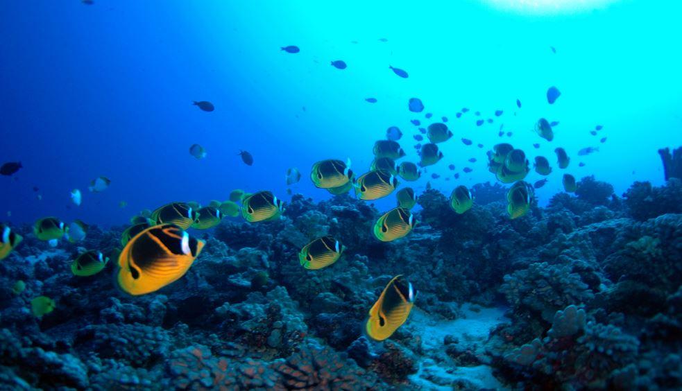 Kaanapali snorkeling trips